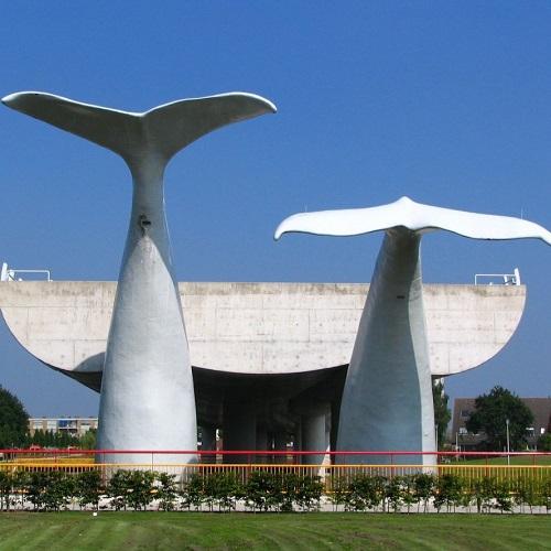 Walvisstaarten Rotterdam
